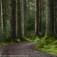 Buy canvas prints of Whinlatter Forest Park by AMANDA AINSLEY