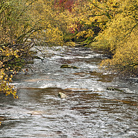 Buy canvas prints of West Dart River by Nick Jenkins