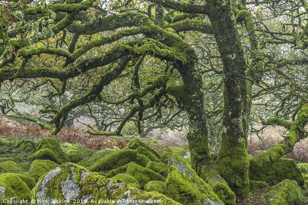 Wistmans Wood Dartmoor Canvas print by Nick Jenkins