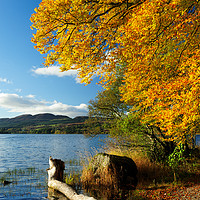 Buy canvas prints of Lake of Menteith  autumn colours by Angus McComiskey