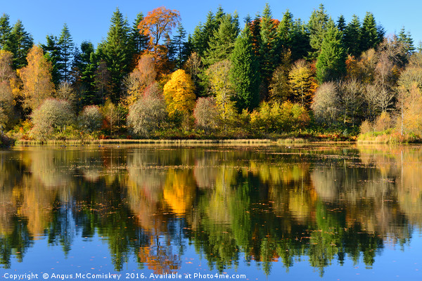 Autumn colours on Penicuik Pond Canvas Print by Angus McComiskey
