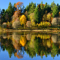 Buy canvas prints of Autumn colours on Penicuik Pond by Angus McComiskey