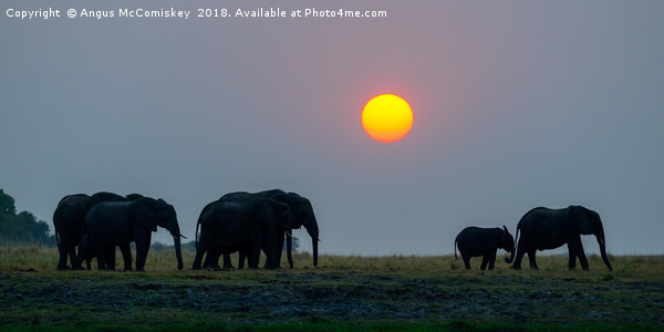 Elephants at sunset Canvas Print by Angus McComiskey