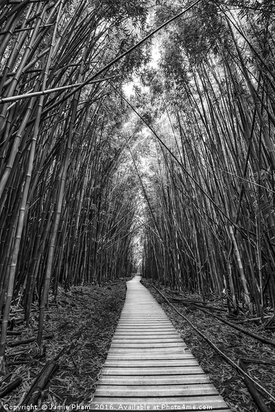 The magical and mysterious bamboo forest of Maui. Canvas print by Jamie Pham