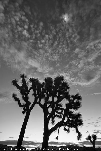 Josua Trees beautifully lit during sunrise in Josh Canvas print by Jamie Pham