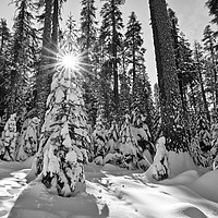 Buy canvas prints of Winter Wonderland of Badger Pass in Yosemite Natio by Jamie Pham