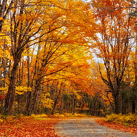 Buy canvas prints of Autumn in Quebec by Colin Woods