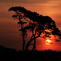 Buy canvas prints of Tree at Sunrise by Colin Woods