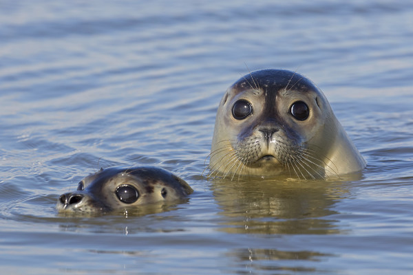 Two Harbour Seals Canvas print by Arterra