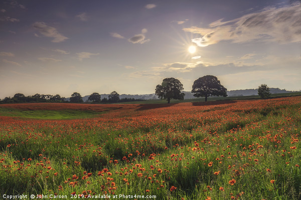 A Field full of poppy's  Canvas Print by John Carson