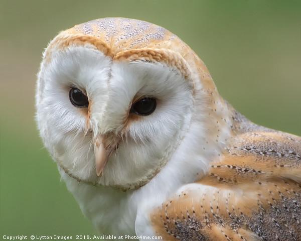 Barn Owl Portrait  Canvas print by Lytton Images