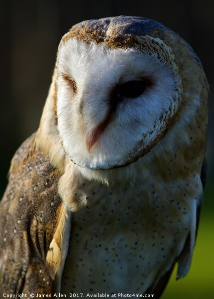 The Happy contented Barn Owl Canvas print by James Allen