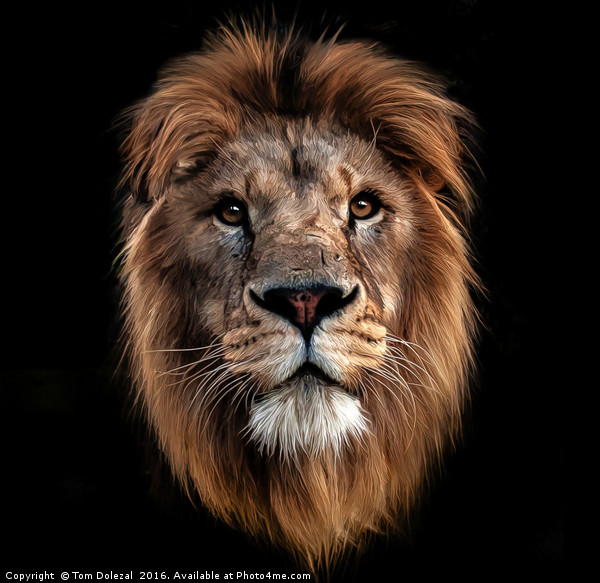 Lion portrait Canvas print by Tom Dolezal