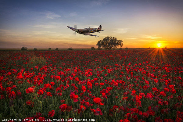 Spitfire over a field of poppies. Canvas print by Tom Dolezal
