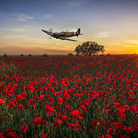 Buy canvas prints of Spitfire over a field of poppies. by Tom Dolezal