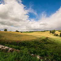 Buy canvas prints of Scotland Corn Field by Sarah Toon LRPS