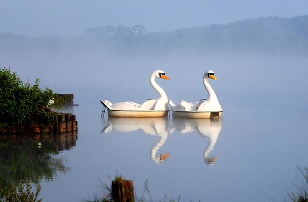 Not really swans in the mist        Canvas print by Peter Balfour