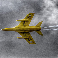 Buy canvas prints of Gnat - Yellowjack by Anne Rogers