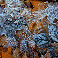 Buy canvas prints of Frozen leaves by Peter Zabulis