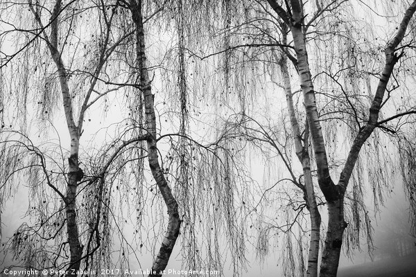 Shrouded in Fog Canvas print by Peter Zabulis