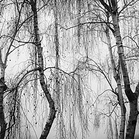 Buy canvas prints of Shrouded in Fog by Peter Zabulis