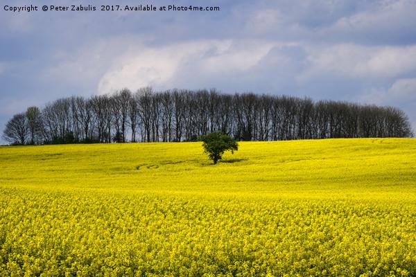 Field of Yellow Canvas print by Peter Zabulis
