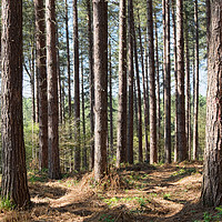 Buy canvas prints of Blidworth Woods by Peter Zabulis