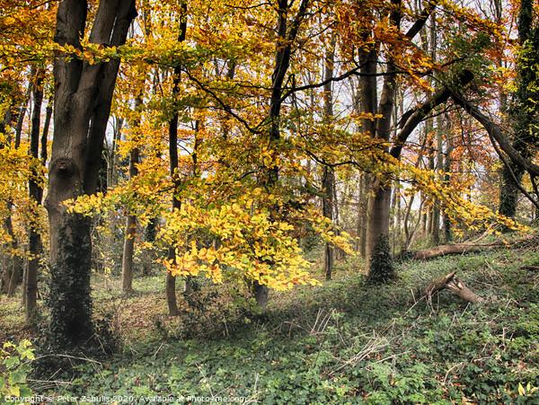 Autumn Colour Canvas Print by Peter Zabulis