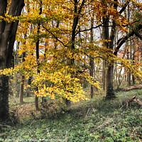 Buy canvas prints of Autumn Colour by Peter Zabulis