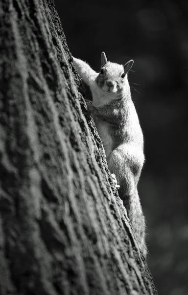 Squirrel under the sun Canvas print by Alfredo Bustos