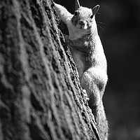 Buy canvas prints of Squirrel under the sun by Alfredo Bustos