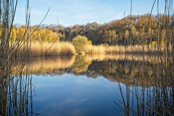 Clockburn Lake Reflections Canvas Print by Rob Cole
