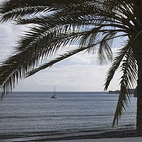 Buy canvas prints of Palm Tree Silhouette by Rob Cole