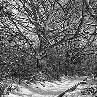 Buy canvas prints of Winter Woodland, Thornley Woods by Rob Cole