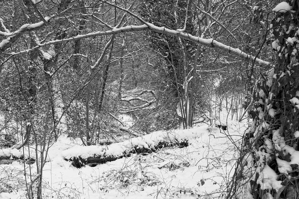 Winter Woodland, Thornley Woods Framed Mounted Print by Rob Cole