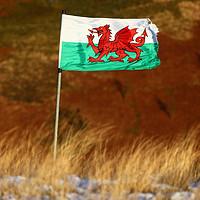 Buy canvas prints of Welsh Flag and Winter Hillside by James Brunker