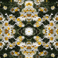 Buy canvas prints of Kaleidoscope Daisies Pattern by steve ball