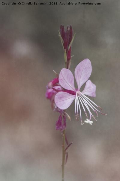 pink flower in the garden Canvas print by Ornella Bonomini