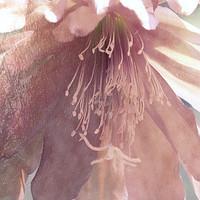Buy canvas prints of flower in spring season by Ornella Bonomini