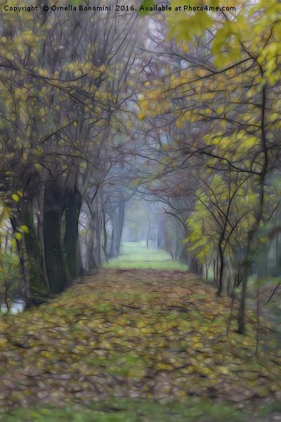 walk in the autumn forest with mist Canvas print by Ornella Bonomini