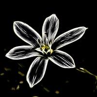 Buy canvas prints of white flower in spring by Ornella Bonomini