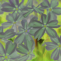 Buy canvas prints of flower in spring by Ornella Bonomini