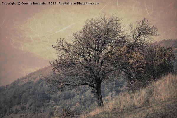 tree on mountain in the autumn mist Canvas print by Ornella Bonomini