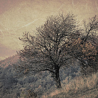 Buy canvas prints of tree on mountain in the autumn mist by Ornella Bonomini