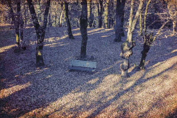 wooden bench in the garden Canvas print by Ornella Bonomini