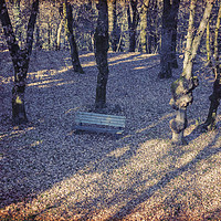 Buy canvas prints of wooden bench in the garden by Ornella Bonomini