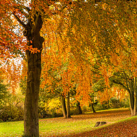 Buy canvas prints of Autumn Colour by Ros Crosland