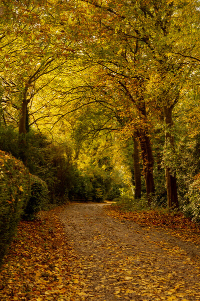 A Yorkshire lane in autumn.  Framed Mounted Print by Ros Crosland