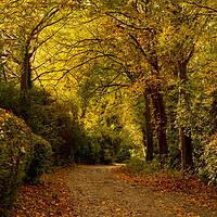 Buy canvas prints of A Yorkshire lane in autumn.  by Ros Crosland