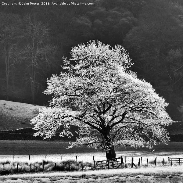 Oak Tree Hoar Frost Canvas print by John Potter